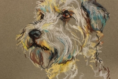 Wheaten Terrier 1