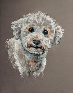 Daisy - Bichon frise - conte crayons on pastel paper